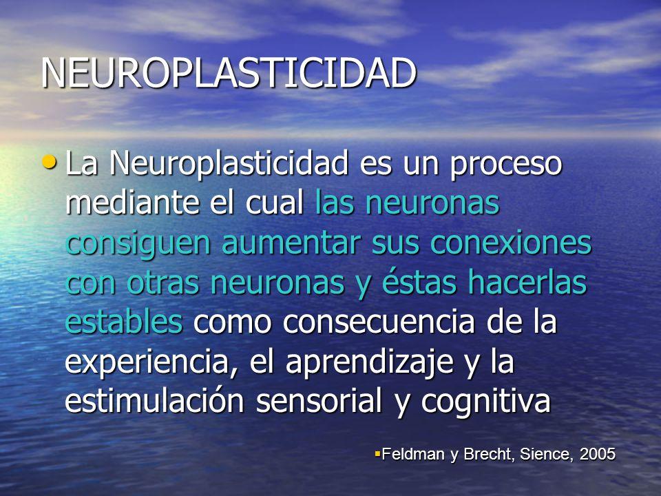 NEUROPLASTICIDAD La Neuroplasticidad es un proceso mediante el cual las neuronas consiguen aumentar sus conexiones con otras neuronas y éstas hacerlas estables como consecuencia de la experiencia, el aprendizaje y la estimulación sensorial y cognitiva La Neuroplasticidad es un proceso mediante el cual las neuronas consiguen aumentar sus conexiones con otras neuronas y éstas hacerlas estables como consecuencia de la experiencia, el aprendizaje y la estimulación sensorial y cognitiva Feldman y Brecht, Sience, 2005 Feldman y Brecht, Sience, 2005
