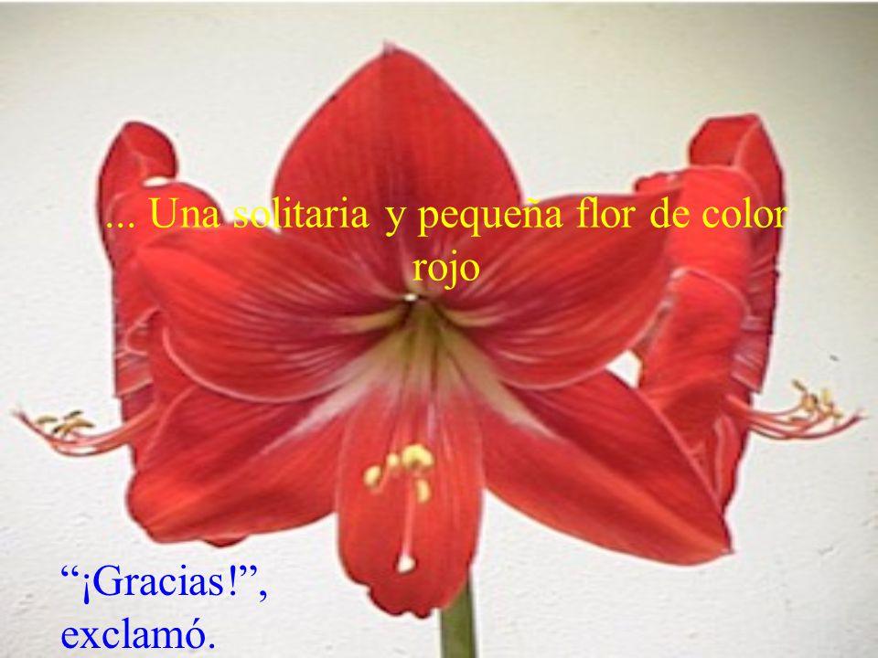 ... Una solitaria y pequeña flor de color rojo ¡Gracias!, exclamó.
