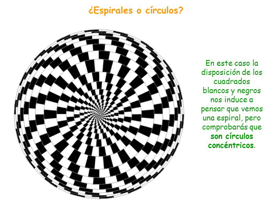 Las líneas horizontales que separan las filas de cuadros no parecen paralelas (¡lo son!). Esto se debe a la alternancia en la posición de los cuadrado
