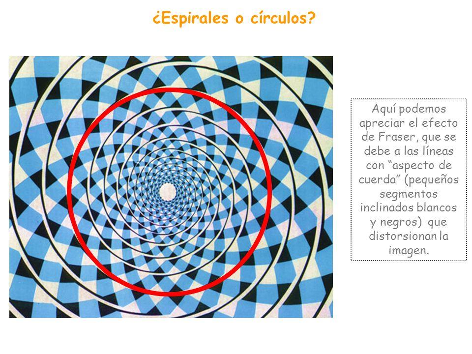 Se trata de cuadrículas perfectas Esta es una de las ilusiones de Akiyoshi Kitaoka: una cuadrícula de cuadros negros y blancos pero que, al añadirle p