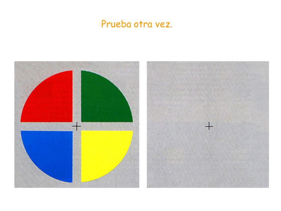 Si miramos fijamente durante unos quince o veinte segundos el centro del círculo amarillo y, seguidamente, fijamos la vista en el punto negro de la ce