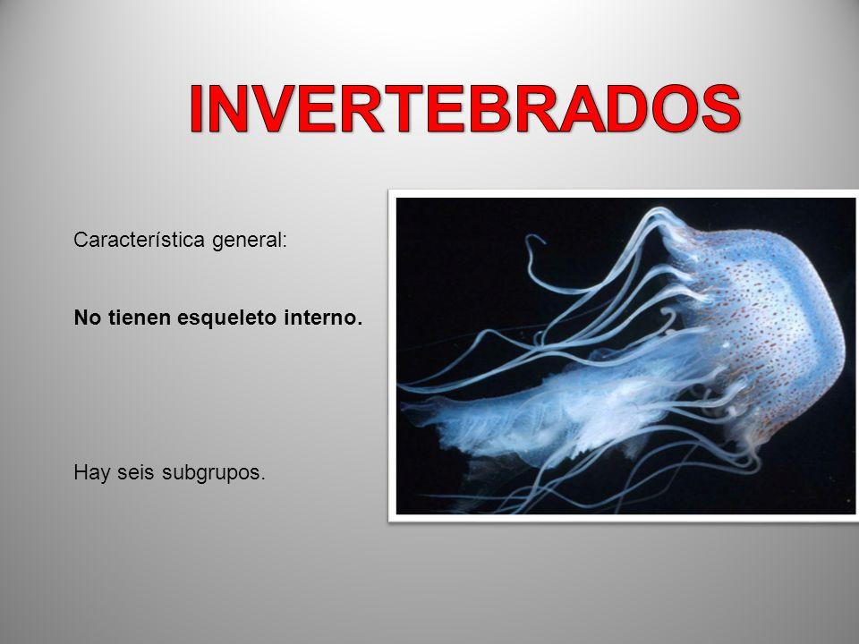 Característica general: No tienen esqueleto interno. Hay seis subgrupos.