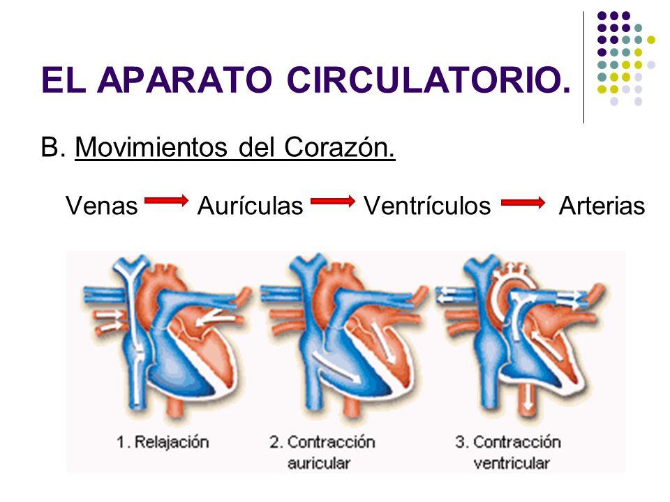B. Movimientos del Corazón. Venas Aurículas Ventrículos Arterias EL APARATO CIRCULATORIO.