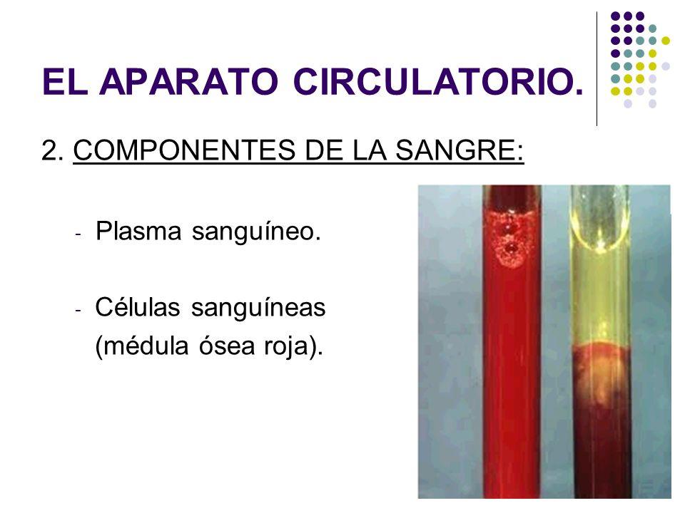 EL APARATO CIRCULATORIO. 2. COMPONENTES DE LA SANGRE: - Plasma sanguíneo. - Células sanguíneas (médula ósea roja).