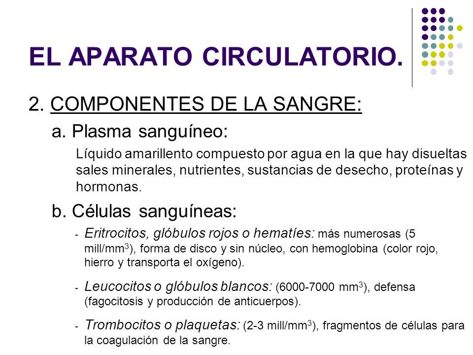 EL APARATO CIRCULATORIO. 2. COMPONENTES DE LA SANGRE: a. Plasma sanguíneo: Líquido amarillento compuesto por agua en la que hay disueltas sales minera