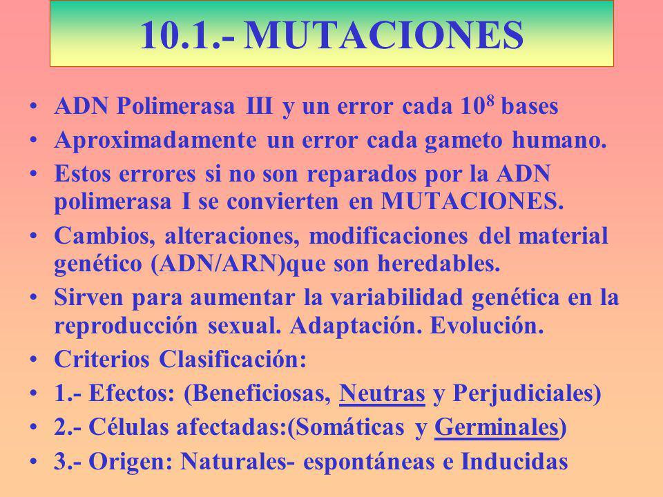 10.1.- MUTACIONES ADN Polimerasa III y un error cada 10 8 bases Aproximadamente un error cada gameto humano.