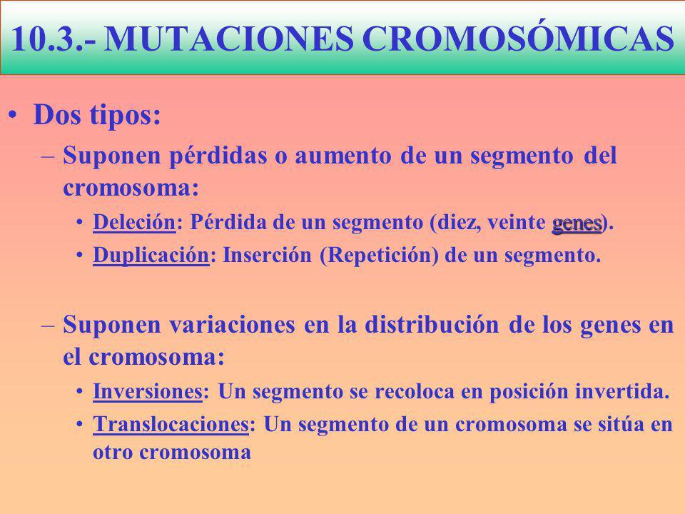 Dos tipos: –Suponen pérdidas o aumento de un segmento del cromosoma: genesDeleción: Pérdida de un segmento (diez, veinte genes).