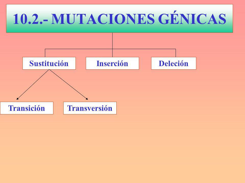 InserciónDeleción TransversiónTransición Sustitución 10.2.- MUTACIONES GÉNICAS