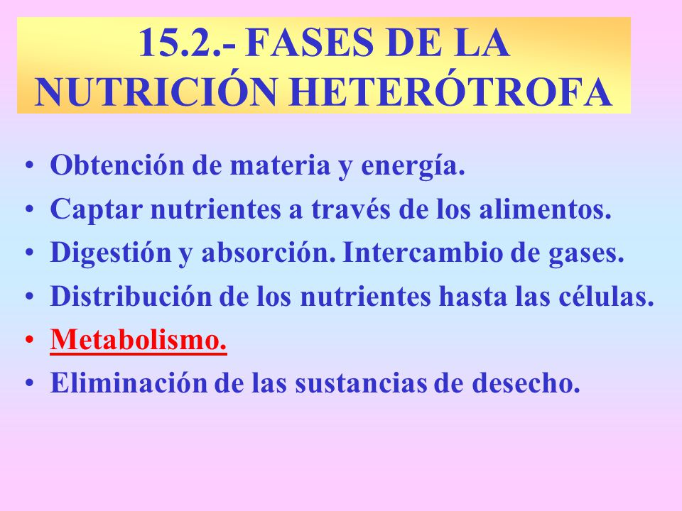 15.2.- FASES DE LA NUTRICIÓN HETERÓTROFA Obtención de materia y energía. Captar nutrientes a través de los alimentos. Digestión y absorción. Intercamb