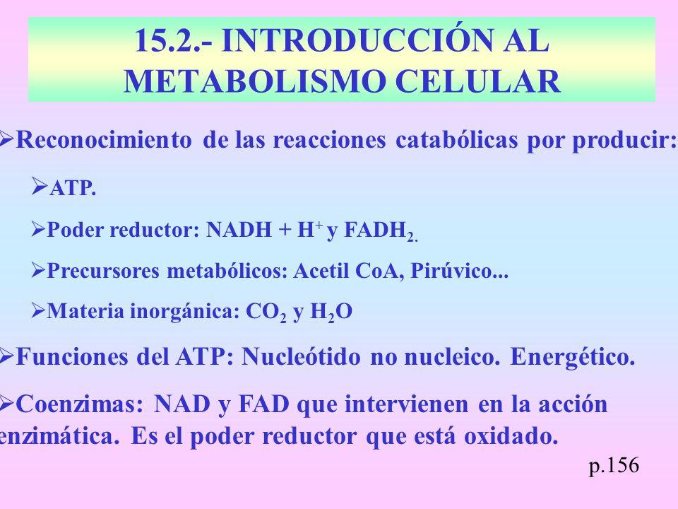 15.2.- INTRODUCCIÓN AL METABOLISMO CELULAR Reconocimiento de las reacciones catabólicas por producir: ATP. Poder reductor: NADH + H + y FADH 2. Precur