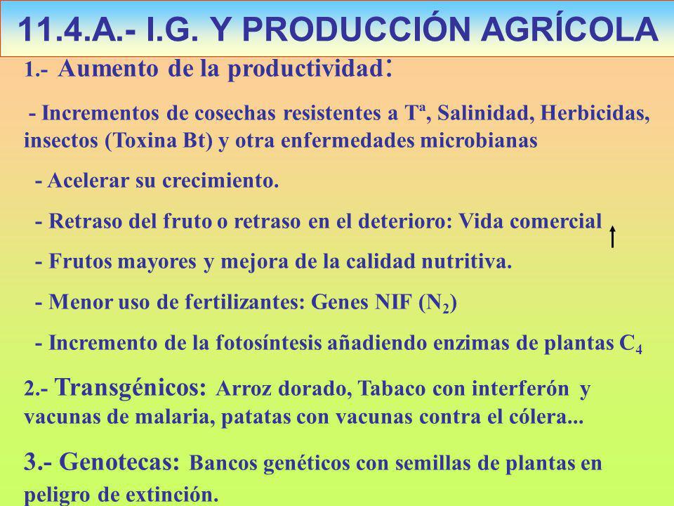 1.- Aumento de la productividad : - Incrementos de cosechas resistentes a Tª, Salinidad, Herbicidas, insectos (Toxina Bt) y otra enfermedades microbianas - Acelerar su crecimiento.