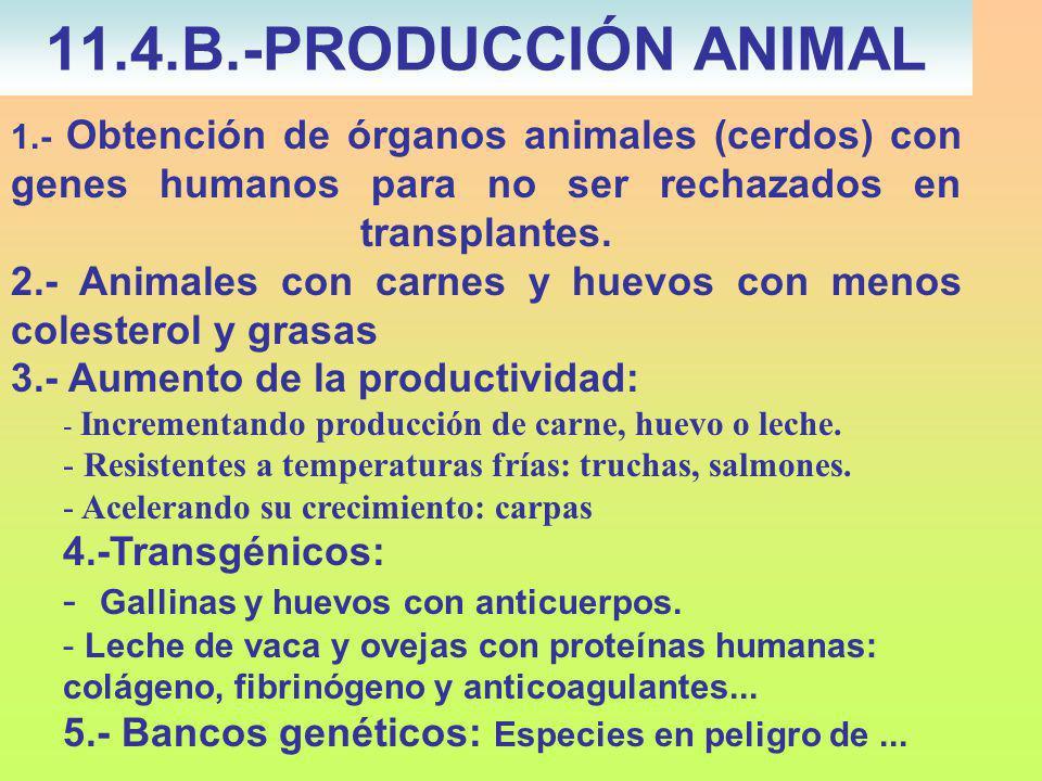 1.- Obtención de órganos animales (cerdos) con genes humanos para no ser rechazados en transplantes.