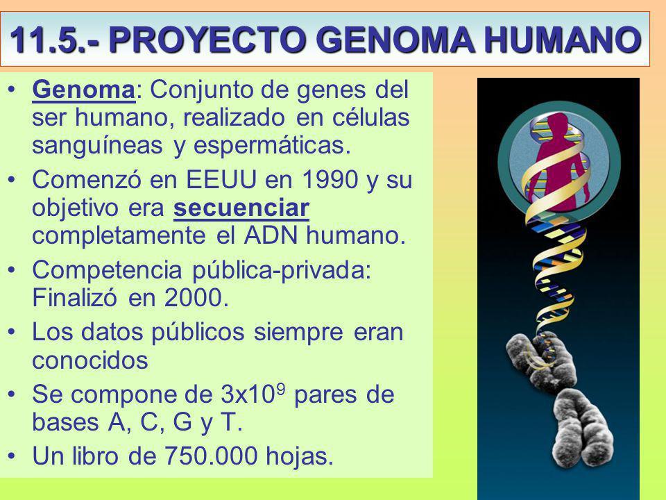 11.5.- PROYECTO GENOMA HUMANO Genoma: Conjunto de genes del ser humano, realizado en células sanguíneas y espermáticas.