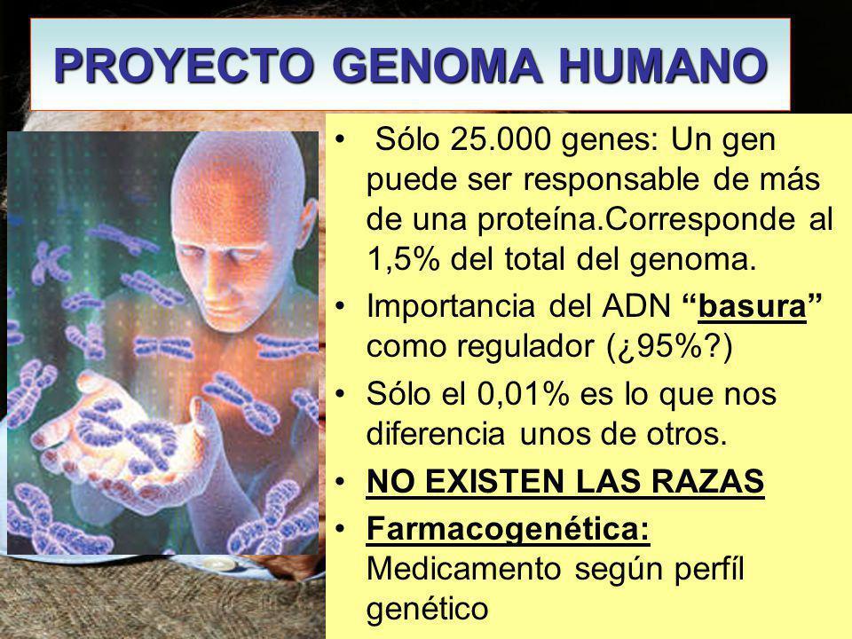 PROYECTO GENOMA HUMANO James Watson Sólo 25.000 genes: Un gen puede ser responsable de más de una proteína.Corresponde al 1,5% del total del genoma.