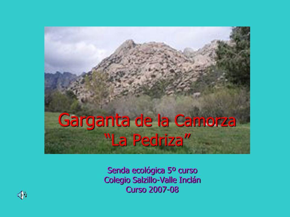 Garganta de la Camorza La Pedriza Senda ecológica 5º curso Colegio Salzillo-Valle Inclán Curso 2007-08