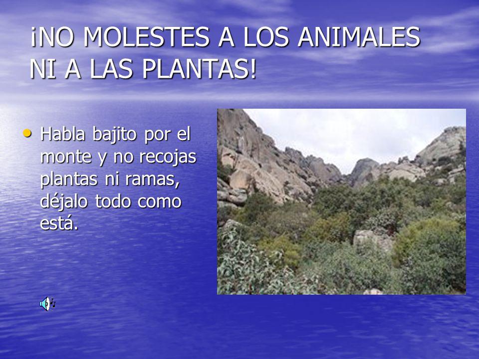 ¡NO MOLESTES A LOS ANIMALES NI A LAS PLANTAS! Habla bajito por el monte y no recojas plantas ni ramas, déjalo todo como está.