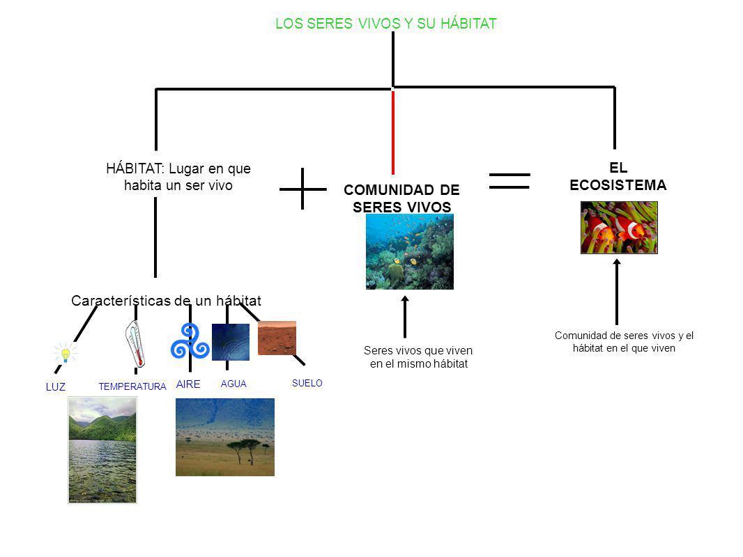 LOS SERES VIVOS Y SU HÁBITAT HÁBITAT: Lugar en que habita un ser vivo Características de un hábitat LUZ TEMPERATURA AGUA AIRE SUELO COMUNIDAD DE SERES