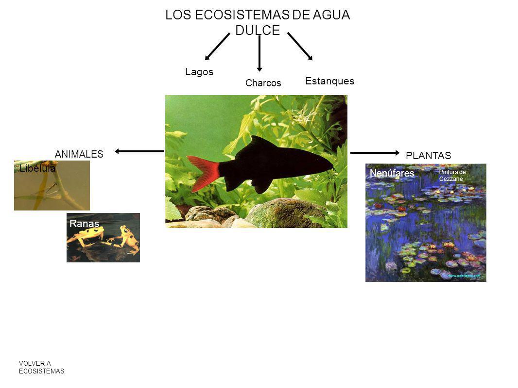 LOS ECOSISTEMAS DE AGUA DULCE Lagos Charcos Estanques PLANTAS ANIMALES Nenúfares Pintura de Cezzane Libélula Ranas VOLVER A ECOSISTEMAS