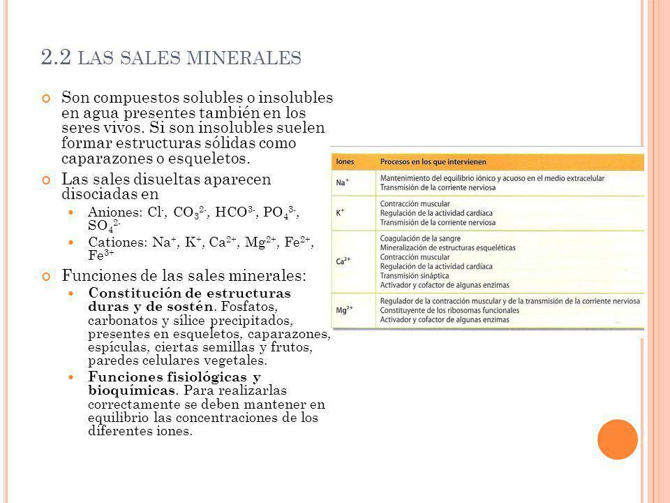 2.2 LAS SALES MINERALES Son compuestos solubles o insolubles en agua presentes también en los seres vivos. Si son insolubles suelen formar estructuras