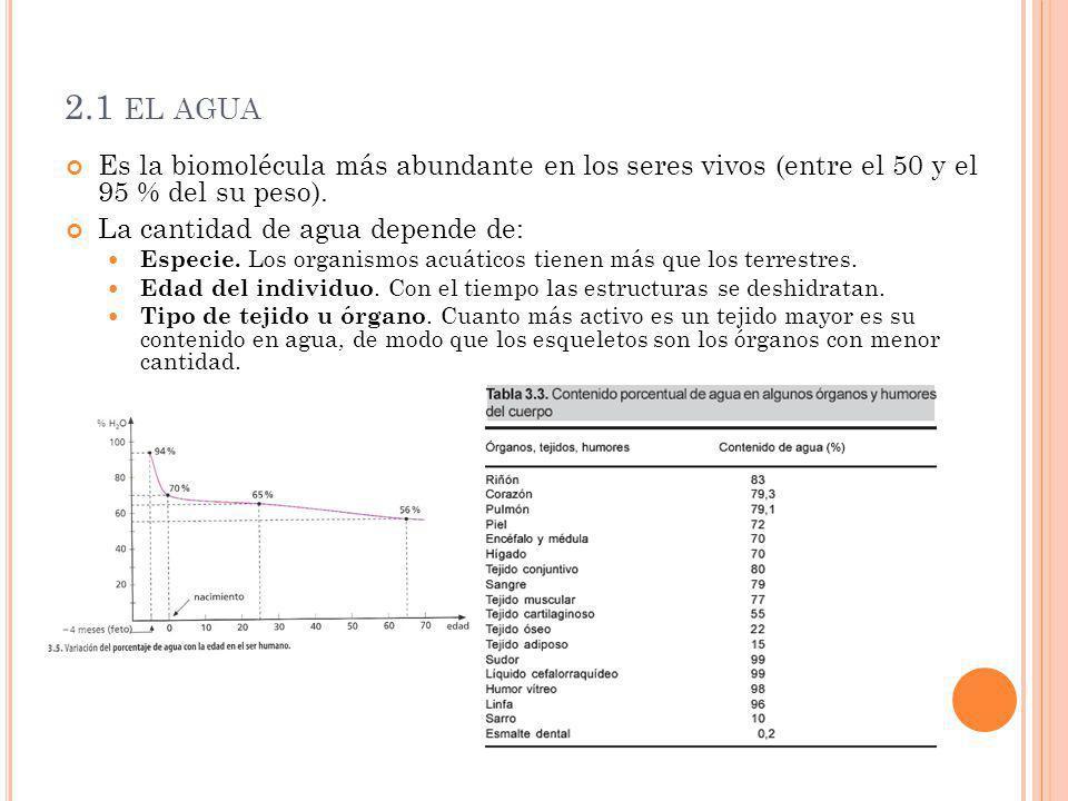 2.1 EL AGUA Es la biomolécula más abundante en los seres vivos (entre el 50 y el 95 % del su peso). La cantidad de agua depende de: Especie. Los organ