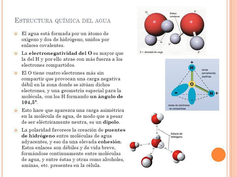 E STRUCTURA QUÍMICA DEL AGUA El agua está formada por un átomo de oxígeno y dos de hidrógeno, unidos por enlaces covalentes. La electronegatividad del