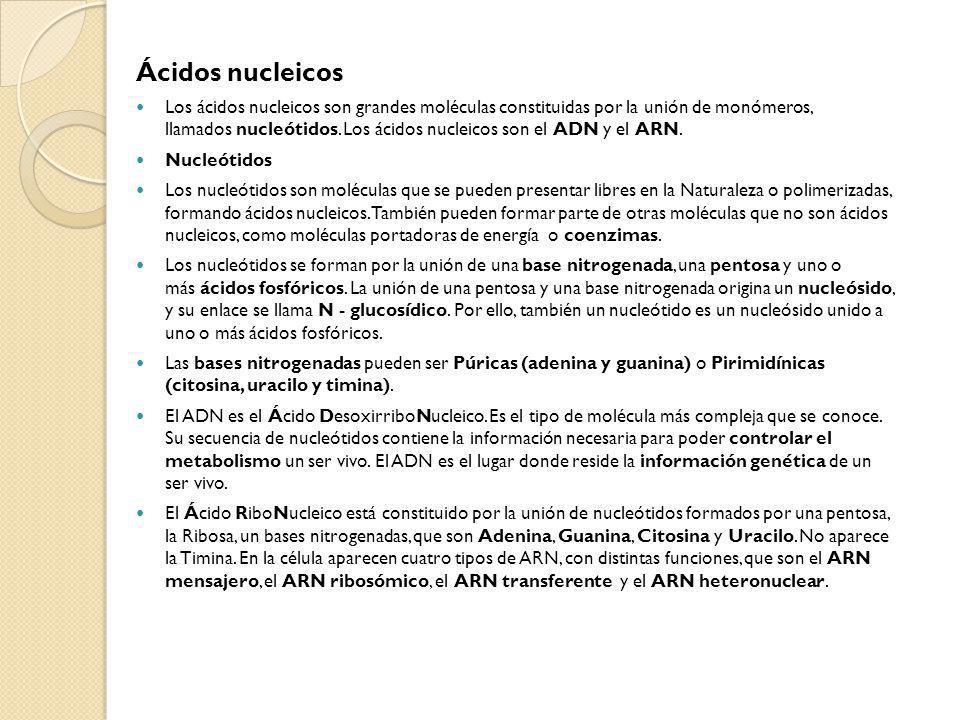 Ácidos nucleicos Los ácidos nucleicos son grandes moléculas constituidas por la unión de monómeros, llamados nucleótidos. Los ácidos nucleicos son el