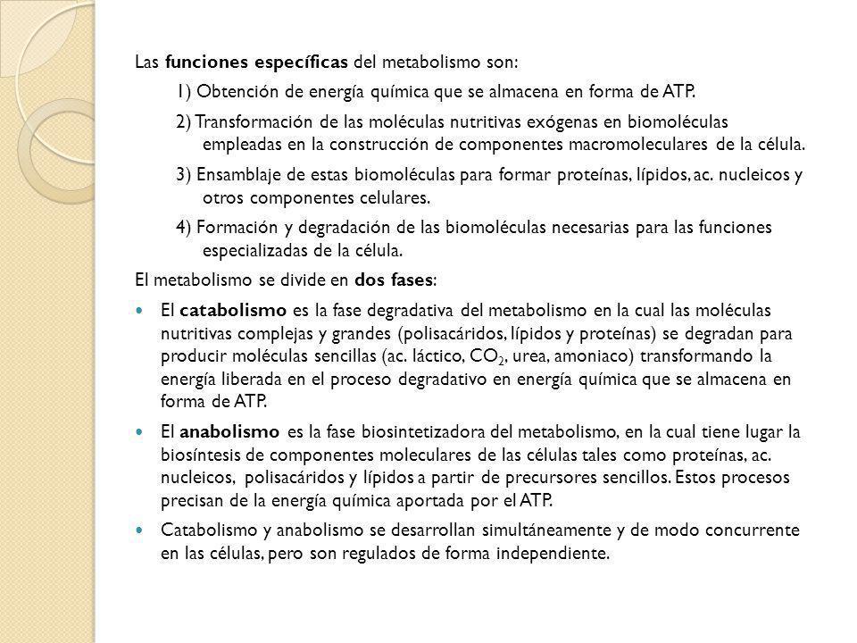 Las funciones específicas del metabolismo son: 1) Obtención de energía química que se almacena en forma de ATP. 2) Transformación de las moléculas nut