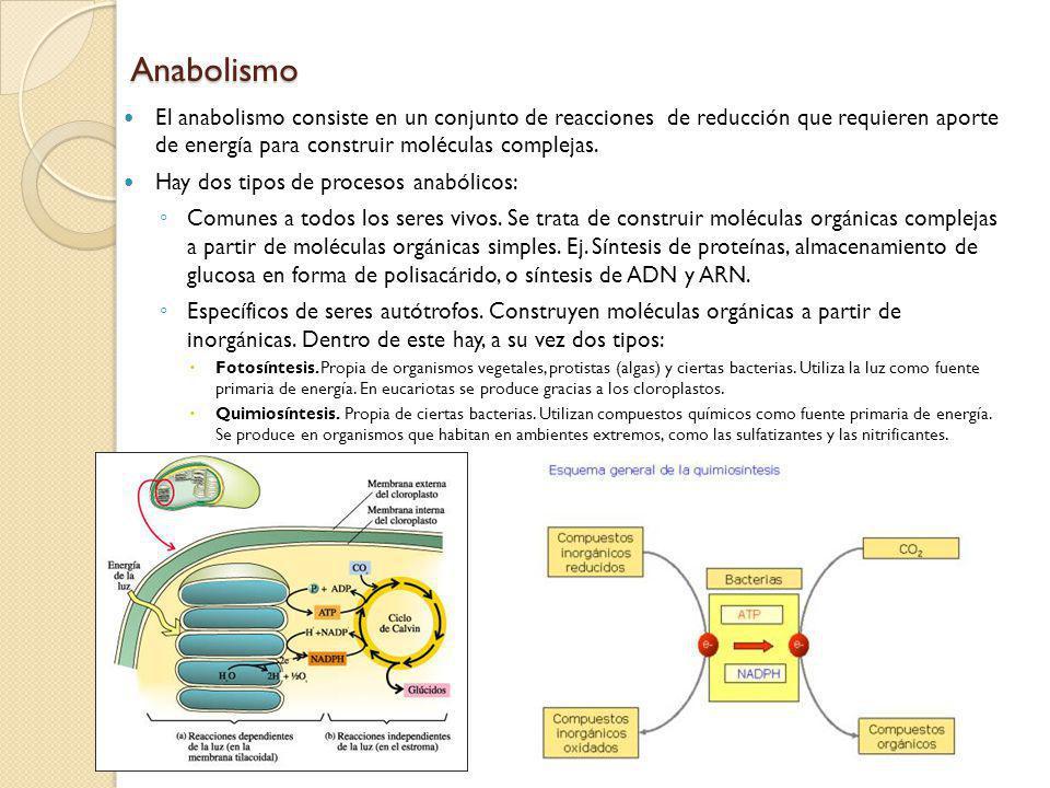 Anabolismo El anabolismo consiste en un conjunto de reacciones de reducción que requieren aporte de energía para construir moléculas complejas. Hay do