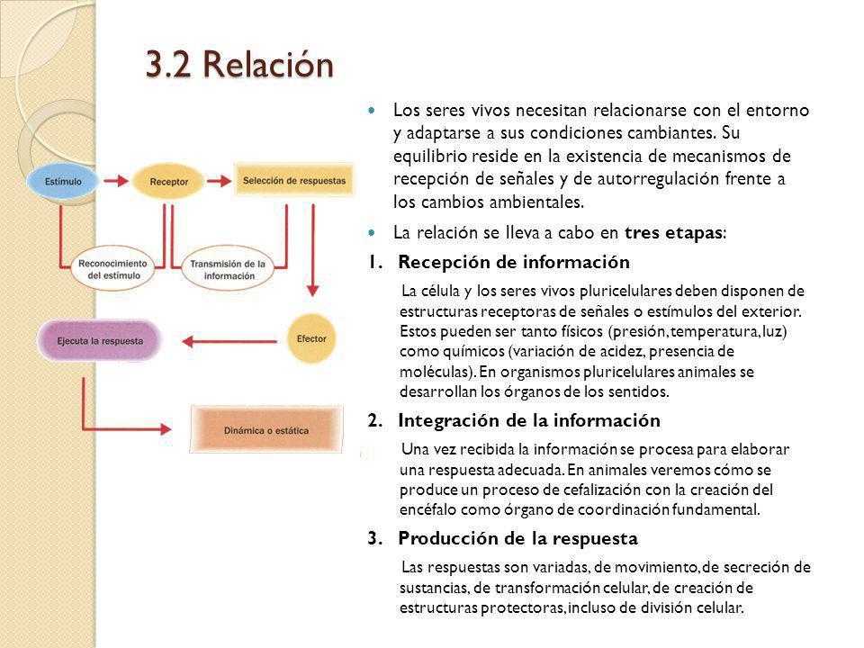 3.2 Relación Los seres vivos necesitan relacionarse con el entorno y adaptarse a sus condiciones cambiantes. Su equilibrio reside en la existencia de