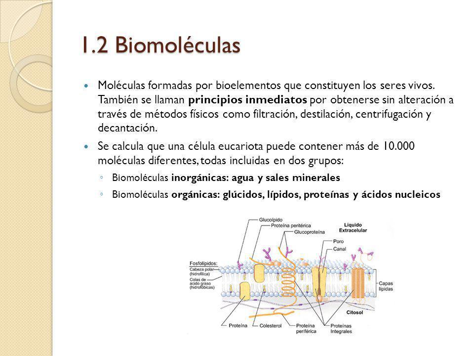 1.2 Biomoléculas Moléculas formadas por bioelementos que constituyen los seres vivos. También se llaman principios inmediatos por obtenerse sin altera