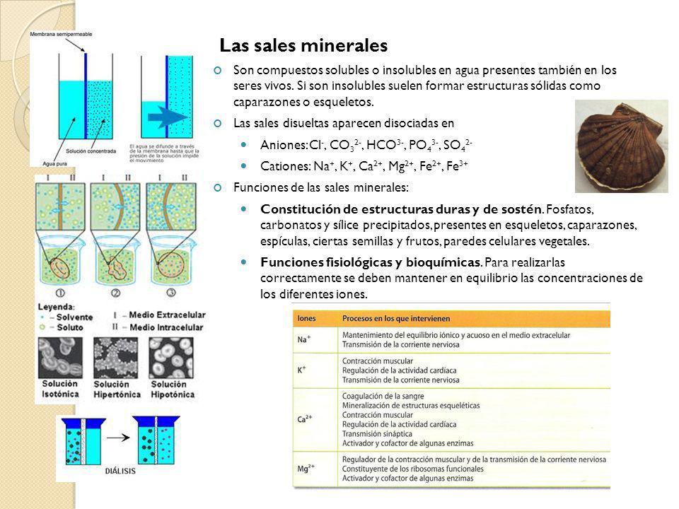 Las sales minerales Son compuestos solubles o insolubles en agua presentes también en los seres vivos. Si son insolubles suelen formar estructuras sól