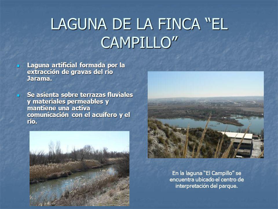 LAGUNA DE LA FINCA EL CAMPILLO Laguna artificial formada por la extracción de gravas del río Jarama.