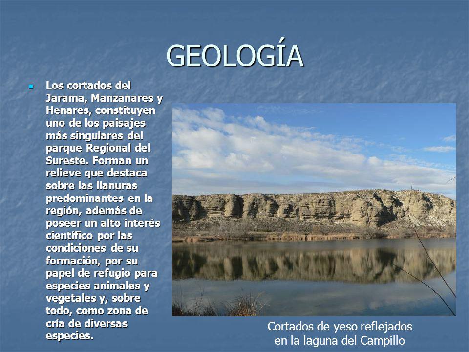 GEOLOGÍA Los cortados del Jarama, Manzanares y Henares, constituyen uno de los paisajes más singulares del parque Regional del Sureste.