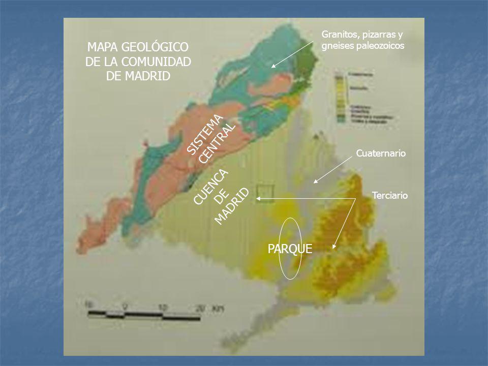 SISTEMA CENTRAL CUENCA DE MADRID PARQUE Granitos, pizarras y gneises paleozoicos Cuaternario Terciario MAPA GEOLÓGICO DE LA COMUNIDAD DE MADRID