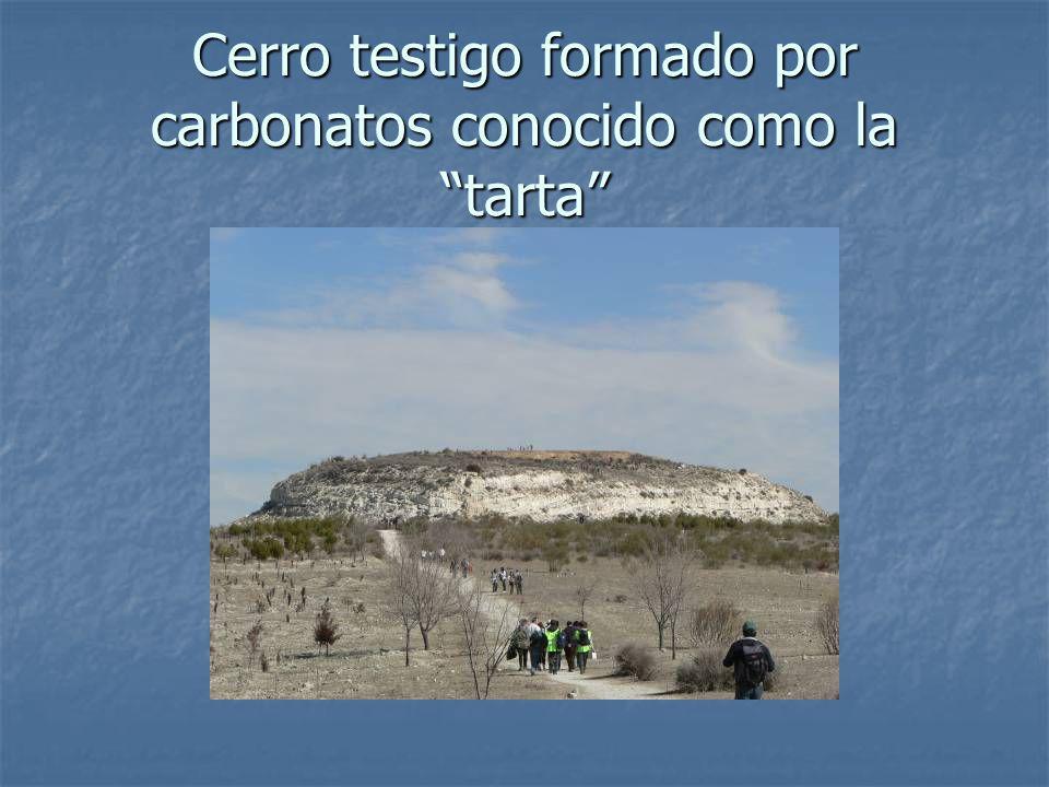 HÁBITATS DEL PARQUE Llanura cerealista: avutarda, sisón, alcaraván.