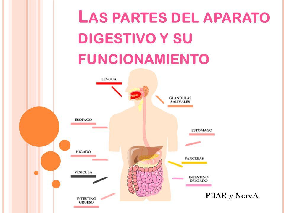 F UNCIONAMIENTO DEL APARATO DIGESTIVO El aparato digestivo o sistema digestivo es el conjunto de órganos encargados del proceso de la digestión.