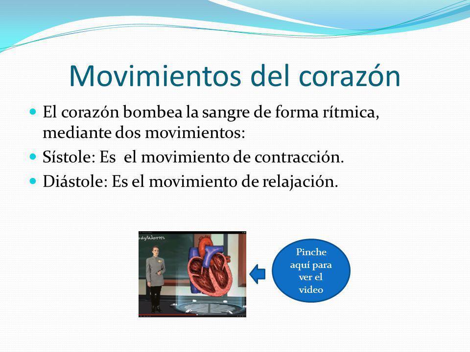 Movimientos del corazón El corazón bombea la sangre de forma rítmica, mediante dos movimientos: Sístole: Es el movimiento de contracción. Diástole: Es