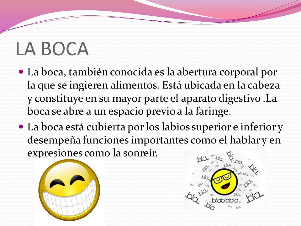 LA BOCA La boca, también conocida es la abertura corporal por la que se ingieren alimentos. Está ubicada en la cabeza y constituye en su mayor parte e