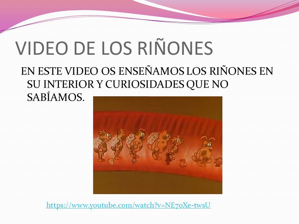 VIDEO DE LOS RIÑONES EN ESTE VIDEO OS ENSEÑAMOS LOS RIÑONES EN SU INTERIOR Y CURIOSIDADES QUE NO SABÍAMOS. https://www.youtube.com/watch?v=NE7oXe-twsU