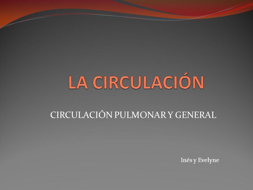CIRCULACIÓN PULMONAR Y GENERAL Inés y Evelyne