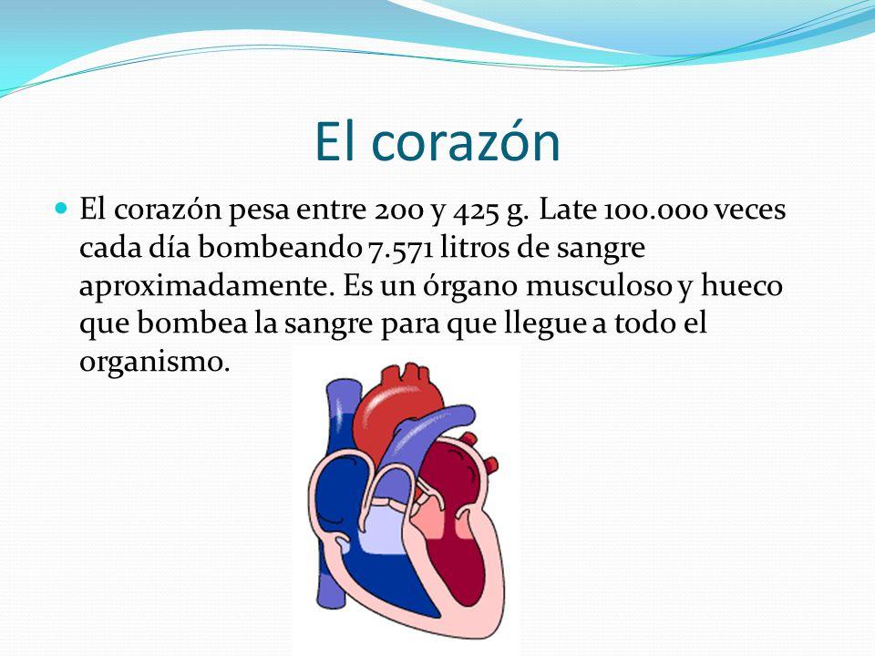 El corazón El corazón pesa entre 200 y 425 g.