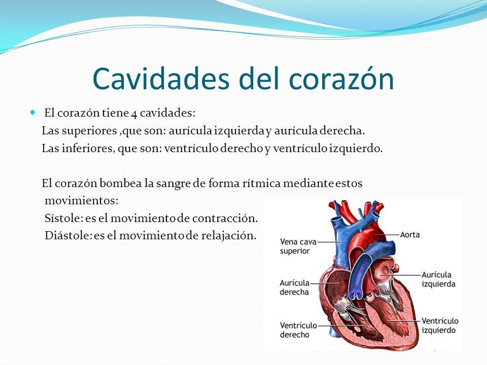 Cavidades del corazón El corazón tiene 4 cavidades: Las superiores,que son: aurícula izquierda y aurícula derecha.