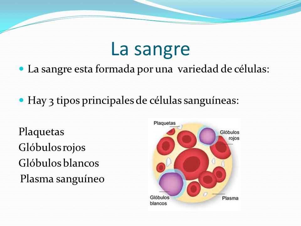 La sangre La sangre esta formada por una variedad de células: Hay 3 tipos principales de células sanguíneas: Plaquetas Glóbulos rojos Glóbulos blancos Plasma sanguíneo