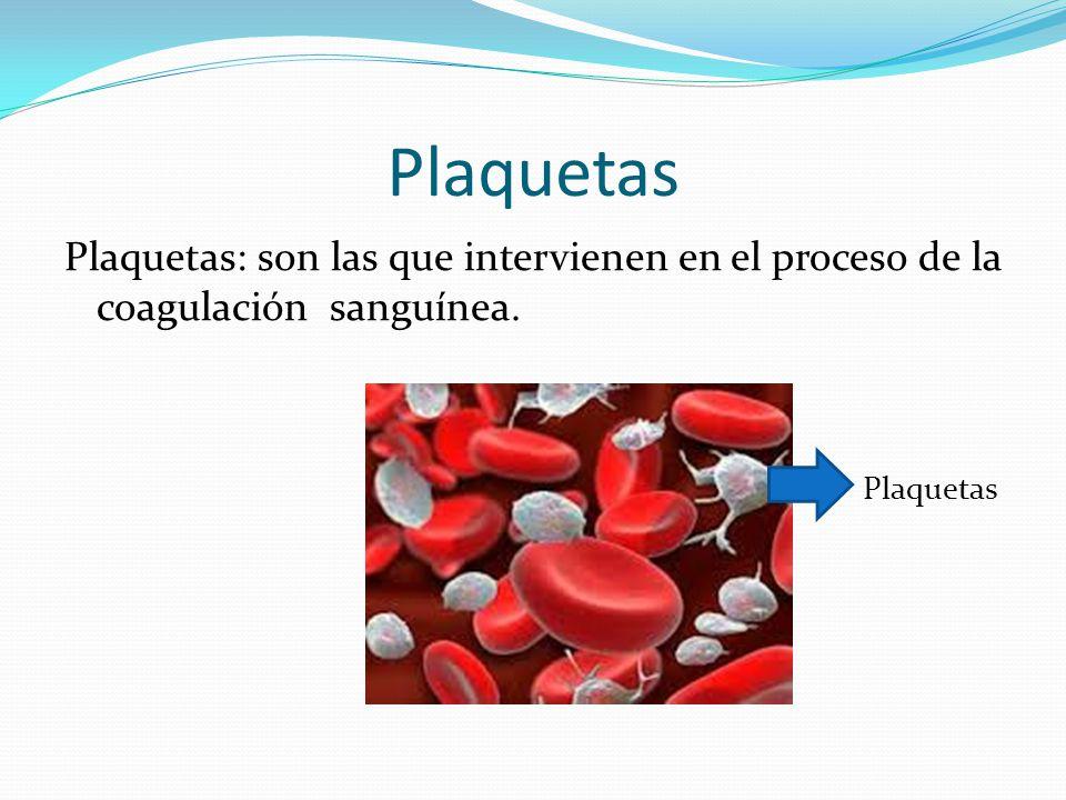 Plaquetas Plaquetas: son las que intervienen en el proceso de la coagulación sanguínea. Plaquetas