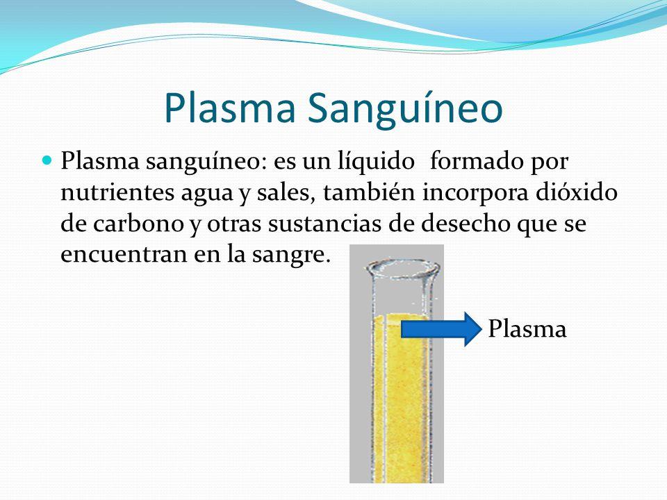 Plasma Sanguíneo Plasma sanguíneo: es un líquido formado por nutrientes agua y sales, también incorpora dióxido de carbono y otras sustancias de desecho que se encuentran en la sangre.
