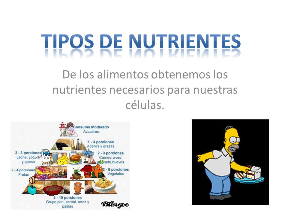 De los alimentos obtenemos los nutrientes necesarios para nuestras células.