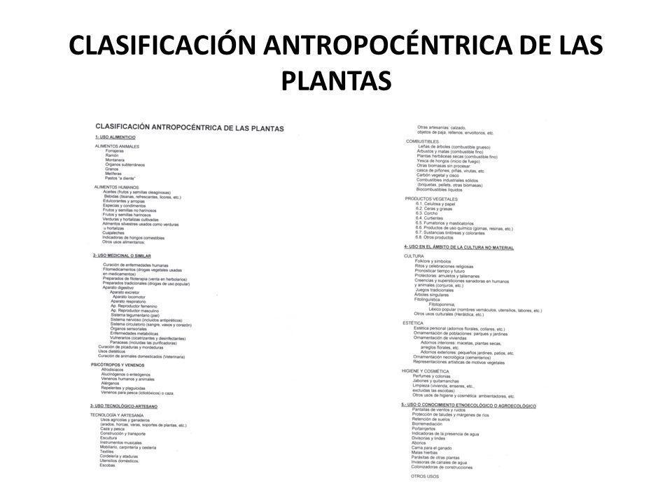 CLASIFICACIÓN ANTROPOCÉNTRICA DE LAS PLANTAS
