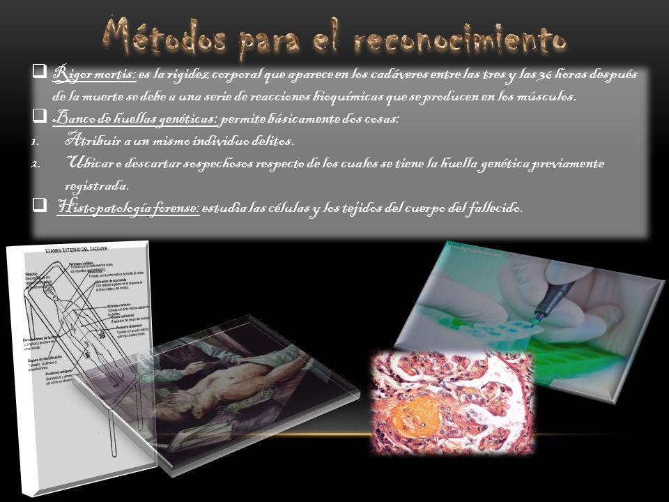 Análisis del ADN: es útil para la identificación de restos humanos y en las investigaciones criminológicas.
