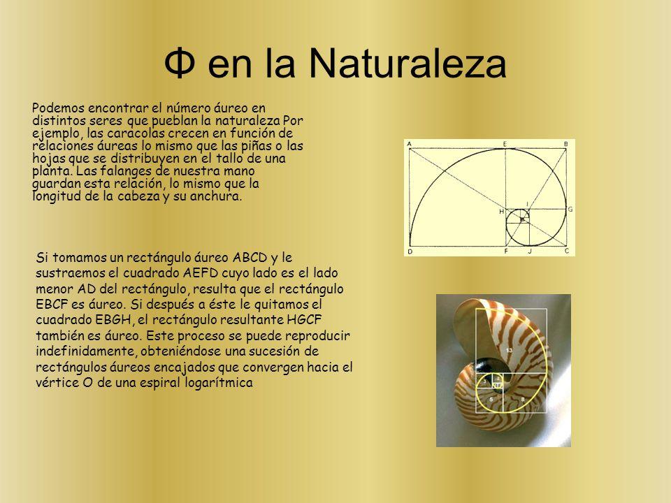 Φ en la Naturaleza Podemos encontrar el número áureo en distintos seres que pueblan la naturaleza Por ejemplo, las caracolas crecen en función de rela