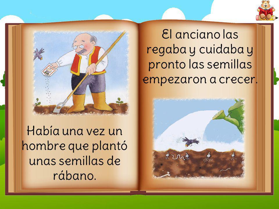 Había una vez un hombre que plantó unas semillas de rábano.